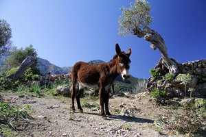 "The donkey is called ""asno"" in Spanish."